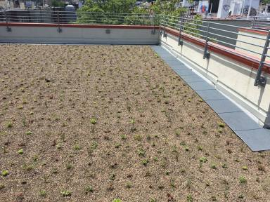 552 Academy - Green Roof Eco Rooftop Garden - Highview Creations