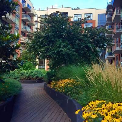 101 Bedford - Brooklyn Rooftop Garden Green Roof - Highview Creations
