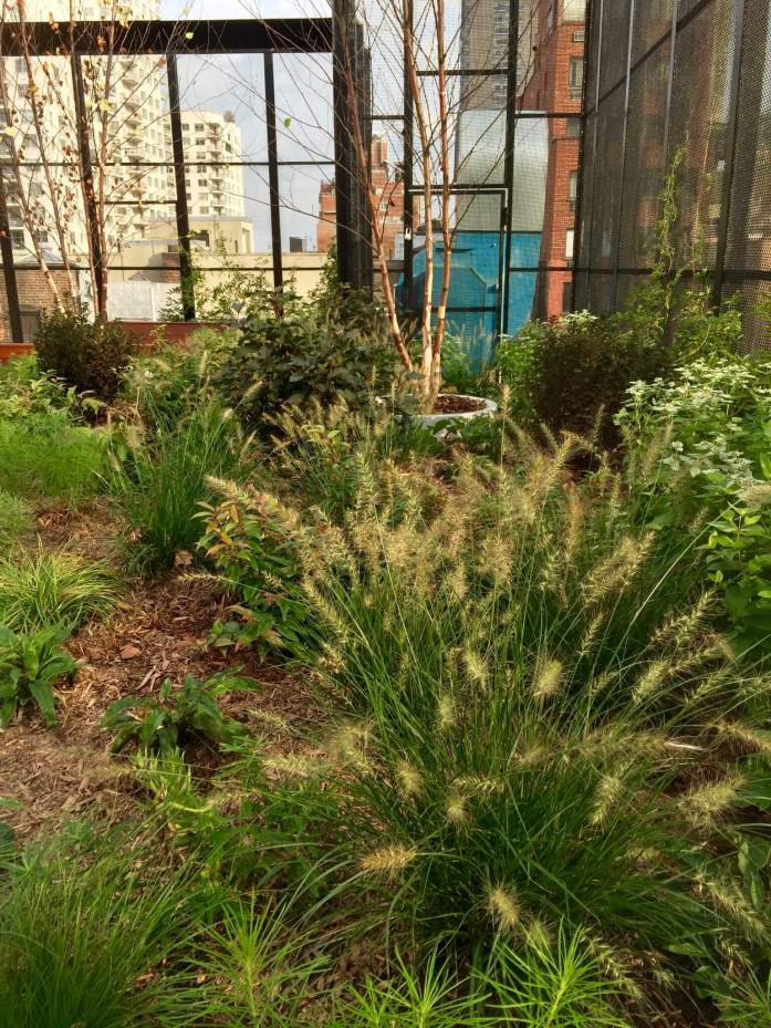 Gracie Square Hospital - Rooftop Garden - Highview Creations