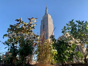 Rooftop garden view of Empire State Building