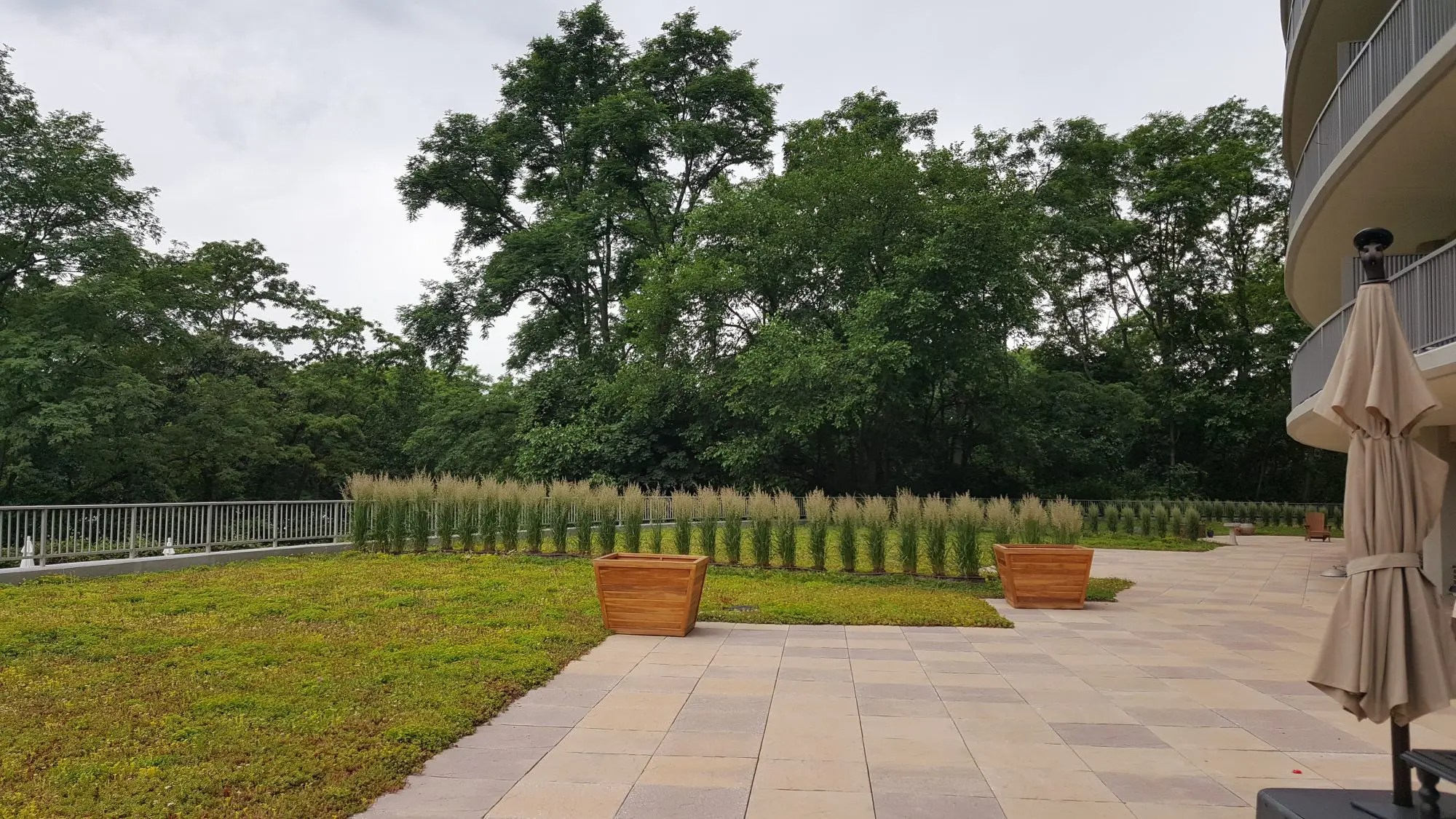 extensive green roof in the Bronx designed and installed by Highview Creations