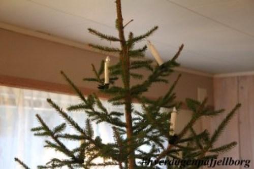 Tjuende dag Knut jager jula og juletreet ut