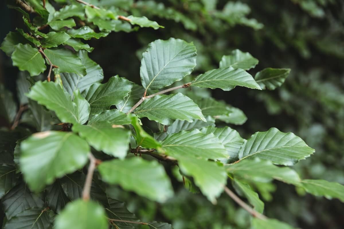 Hvordan fungerer fotosyntese?