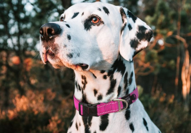 Rogz sells pet collars and leashes, toys, beds and other accessories.