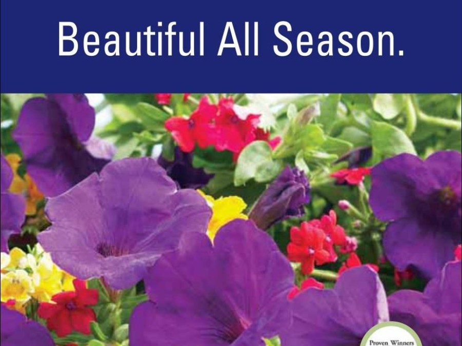 1Gallon Proven Winners® Perennials