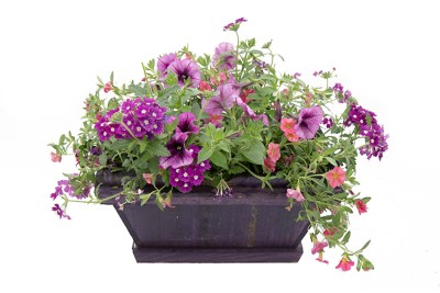 "15"" Window Box Combo"