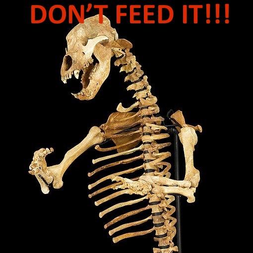 don't-feed-the-bear