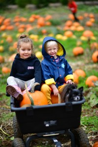 photos from kilchis river pumpkin patch