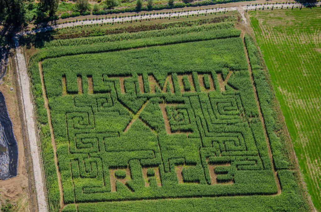 Kilchis river corn maze