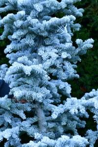 oregon coastal flowers flocked christmas trees