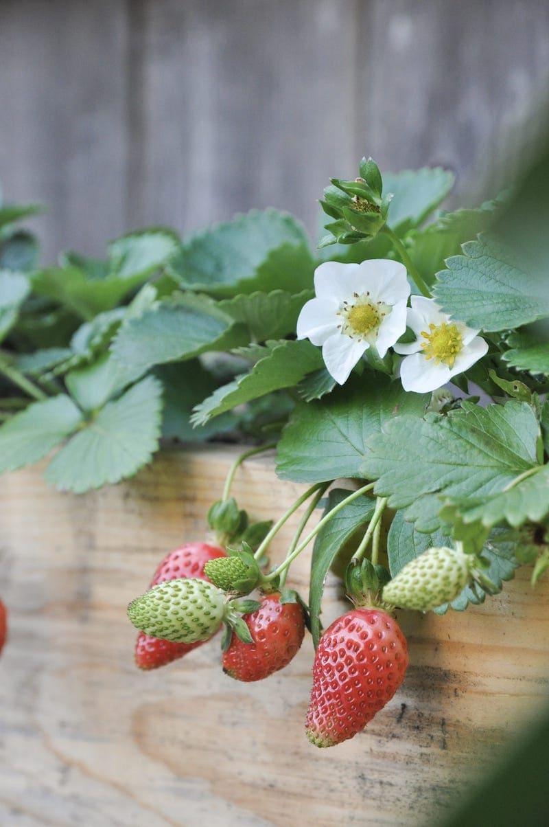 Diy Tiered Strawberry Planter Vertical Garden Ideas