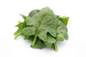 green vegetable - hydroponics garden