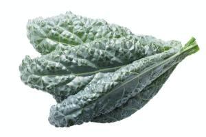 Bumpy leaf cabbage kale Tuscan