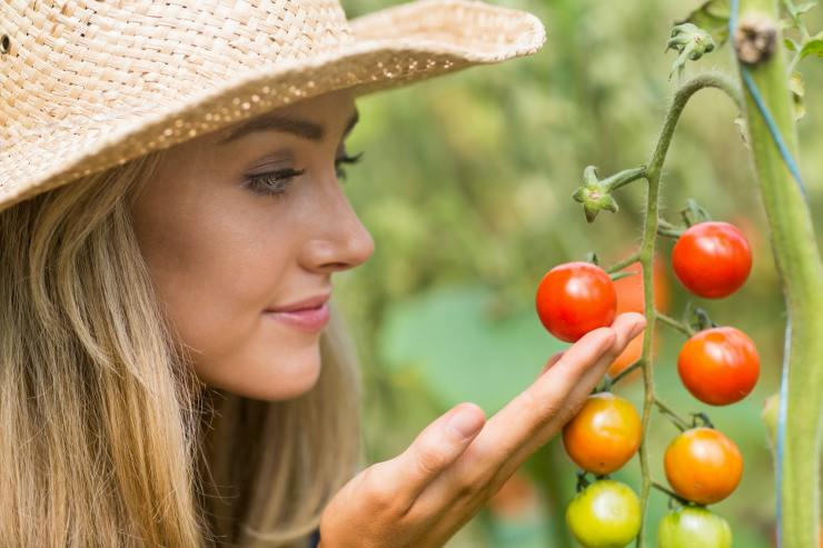 Pretty blonde looking at tomato plant at home in the garden