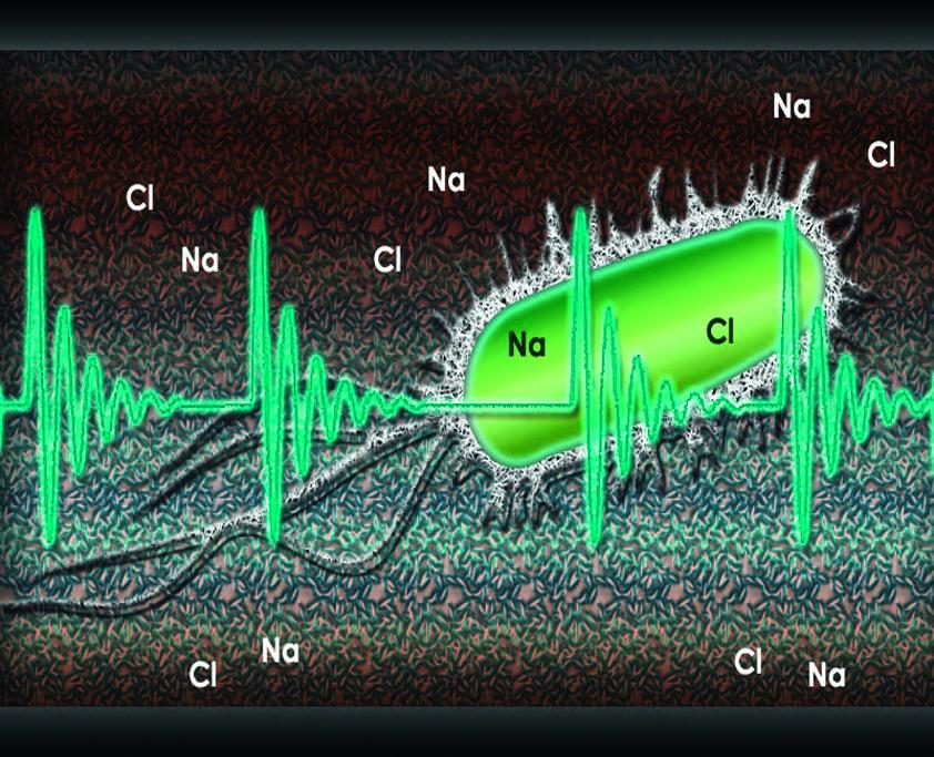 La technologie HydroPATH Destruction et élimination des bactéries