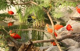 Traitement d'algues et biofilm du bassin des ibis au Zoo de Montpellier : Encore un hydroFLOW