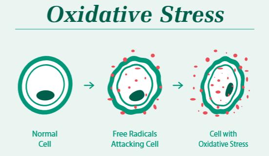 oxidative stress hydrogen
