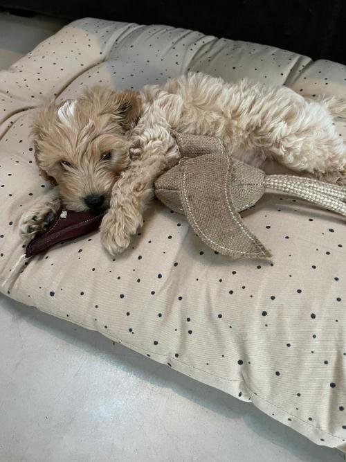 Simba asleep on his bed