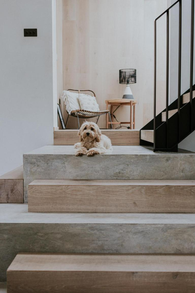 Puppy Simba on Stairs