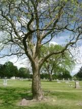 Helen Nelson Hylbom grave marker (c. 1900-1928), the first wife of Tor Emil Hylbom (Maplewood Memorial Lawn Cemetery, Emporia, Kansas – Plot: 35 – 18 – 1) (photo credit: Becky Doan, May 2014)