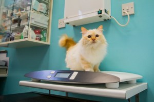 hyndland street vet - Cat on scale