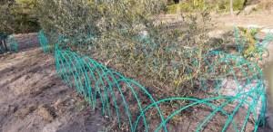 Wild boar fence_20190129_160421 (800x389)