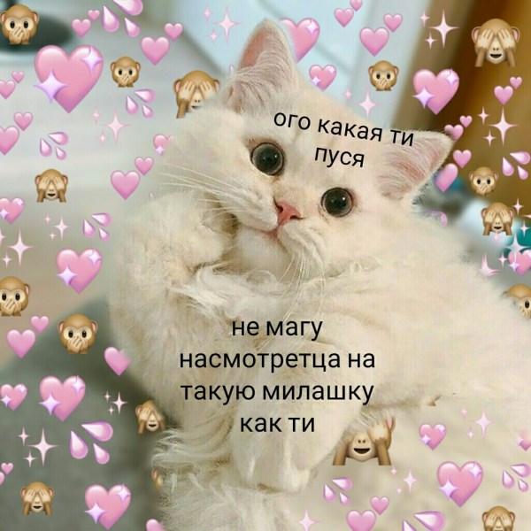Милые картинки котиков с надписями для соц.сетей » Портал ...
