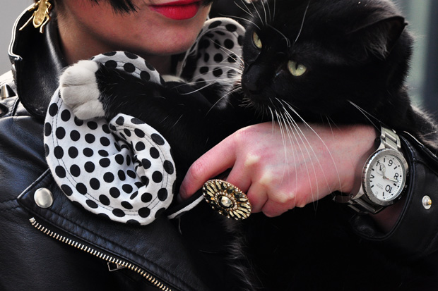 Streetsnaps: Black Cat, White Paws