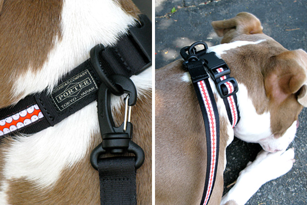 OriginalFake Dog Collar & Leash