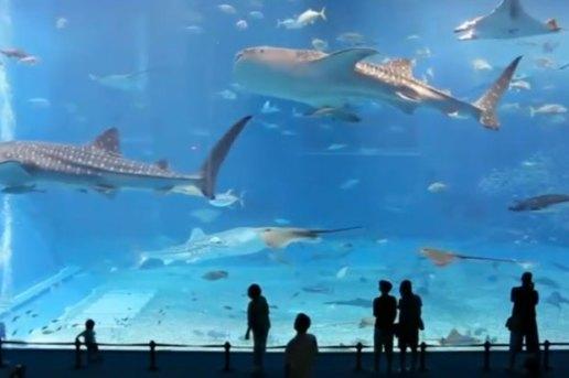 N.E.R.D. – Life As A Fish