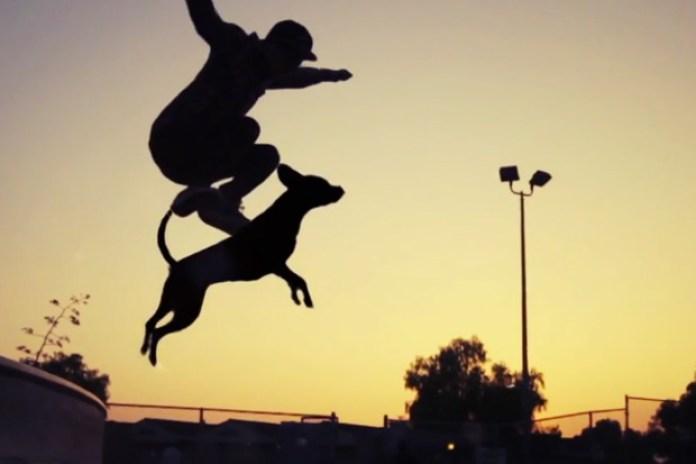 Dogboarding by DANIELS