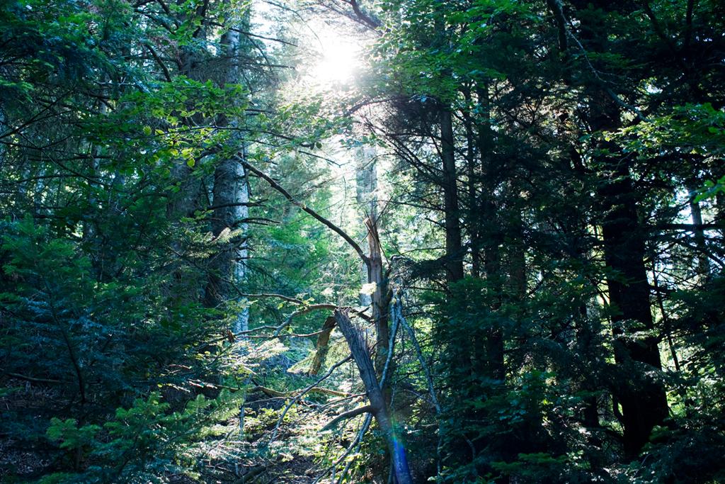 pigalle colette x merrell wilderness lookbook