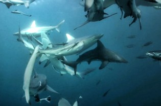 Surfing and Sharks Film Trailer
