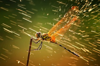 Winners of the 2011 National Geographic Photo Contest