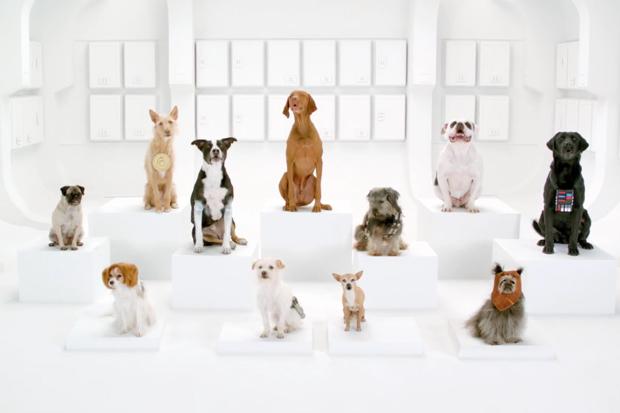 The Bark Side: 2012 Volkswagen Game Day Commercial Teaser
