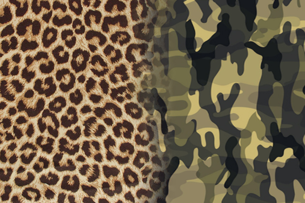 Polls: Cheetah Print vs. Camo