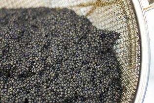 Black Gold: Mote Caviar