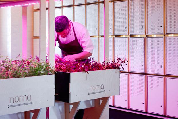 noma foodlab by 3xn