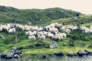 Harris Tweed: From Shearing to Stamping Video