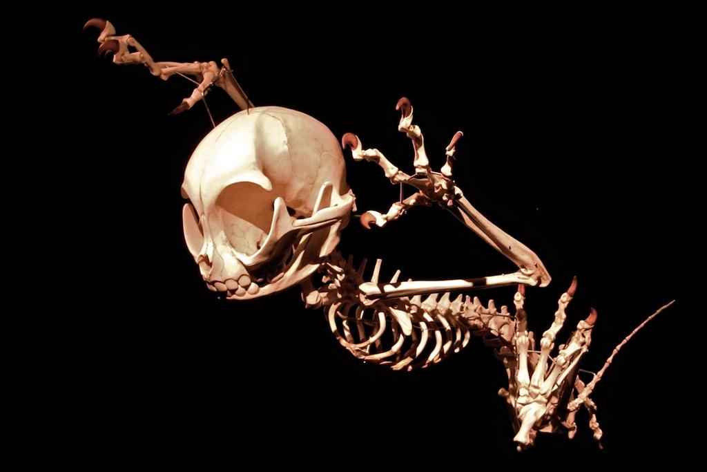 Art Focus: Hyungkoo Lee Recreates the Skeletal Structures of Cartoon Characters