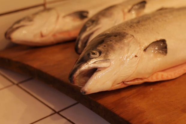 NOWNESS: Ole Hansen's Smoked Salmon Recipe