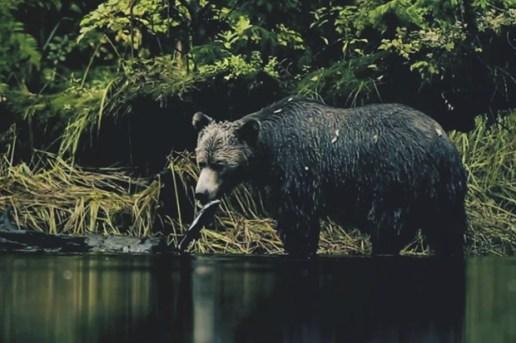 Stussy Canada Showcase the Photography of Jeremy Koreski