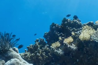 Google Maps Now Offers Ocean Views