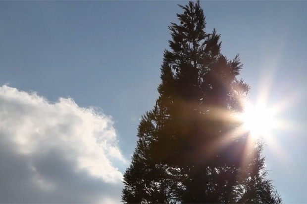 Cai Guo-Qiang Makes a 40-Foot-Tall Pine Tree Explode
