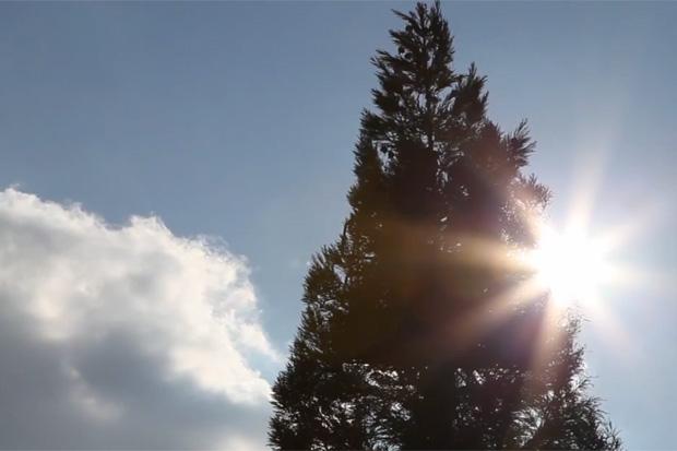 Cai Guo-Qiang Makes a 40-Foot-Tall Pine Tree Explode