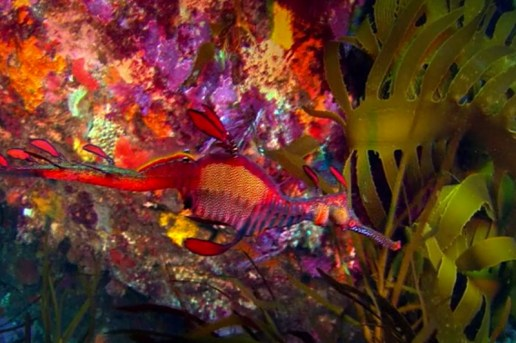 Lynette Wallworth's 'Coral, Rekindling Venus' Trailer