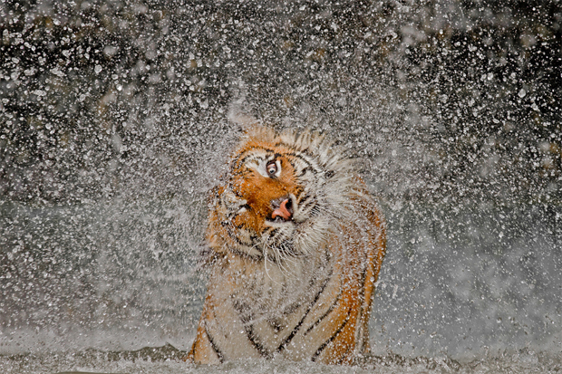 National Geographic's 2012 Photos of the Year