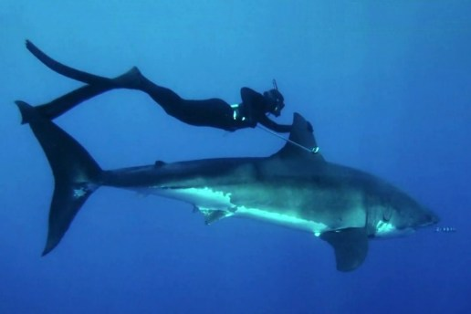 Kimi Werner Recalls Swimming with a Great White Shark for Patagonia
