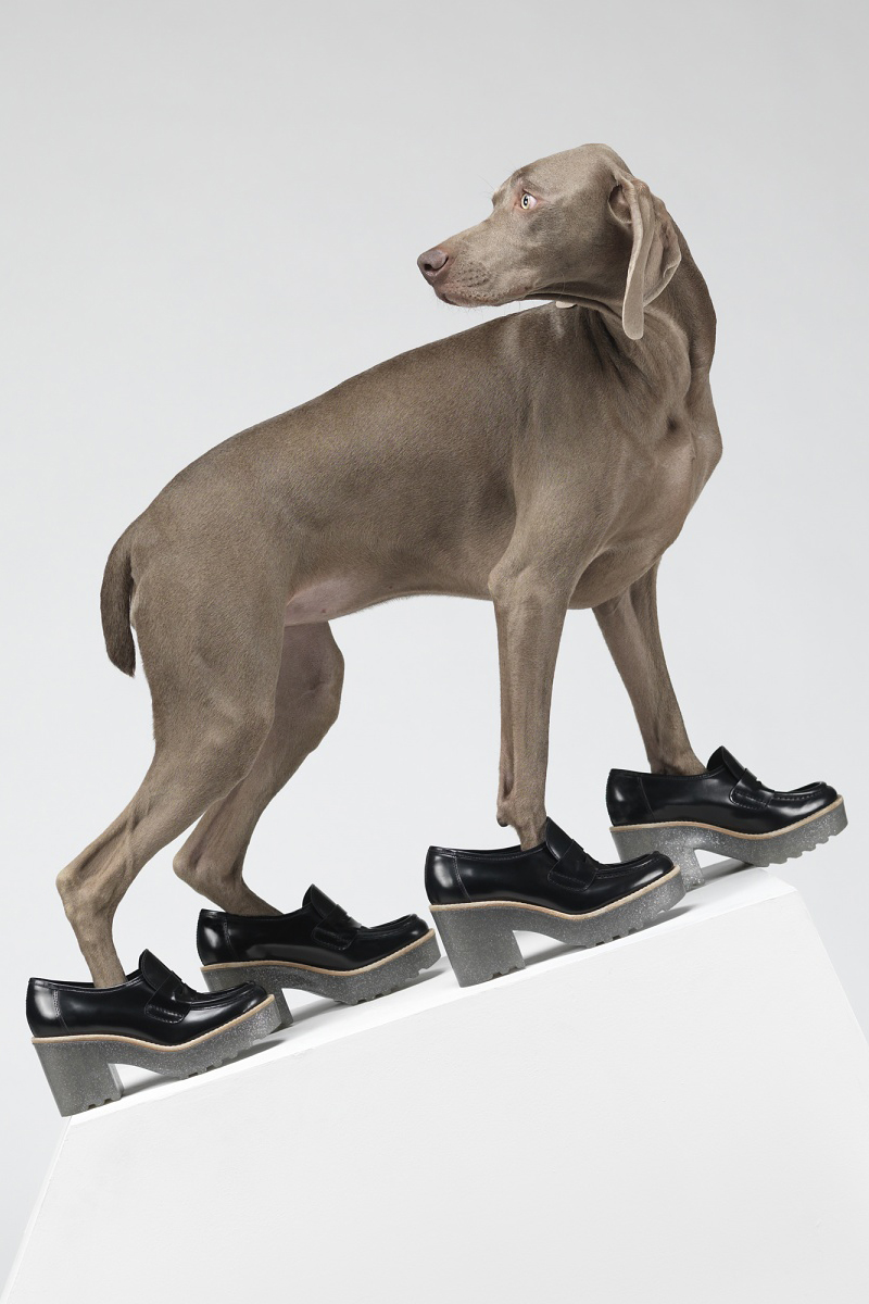 hat dogs by william wegman for acne studios