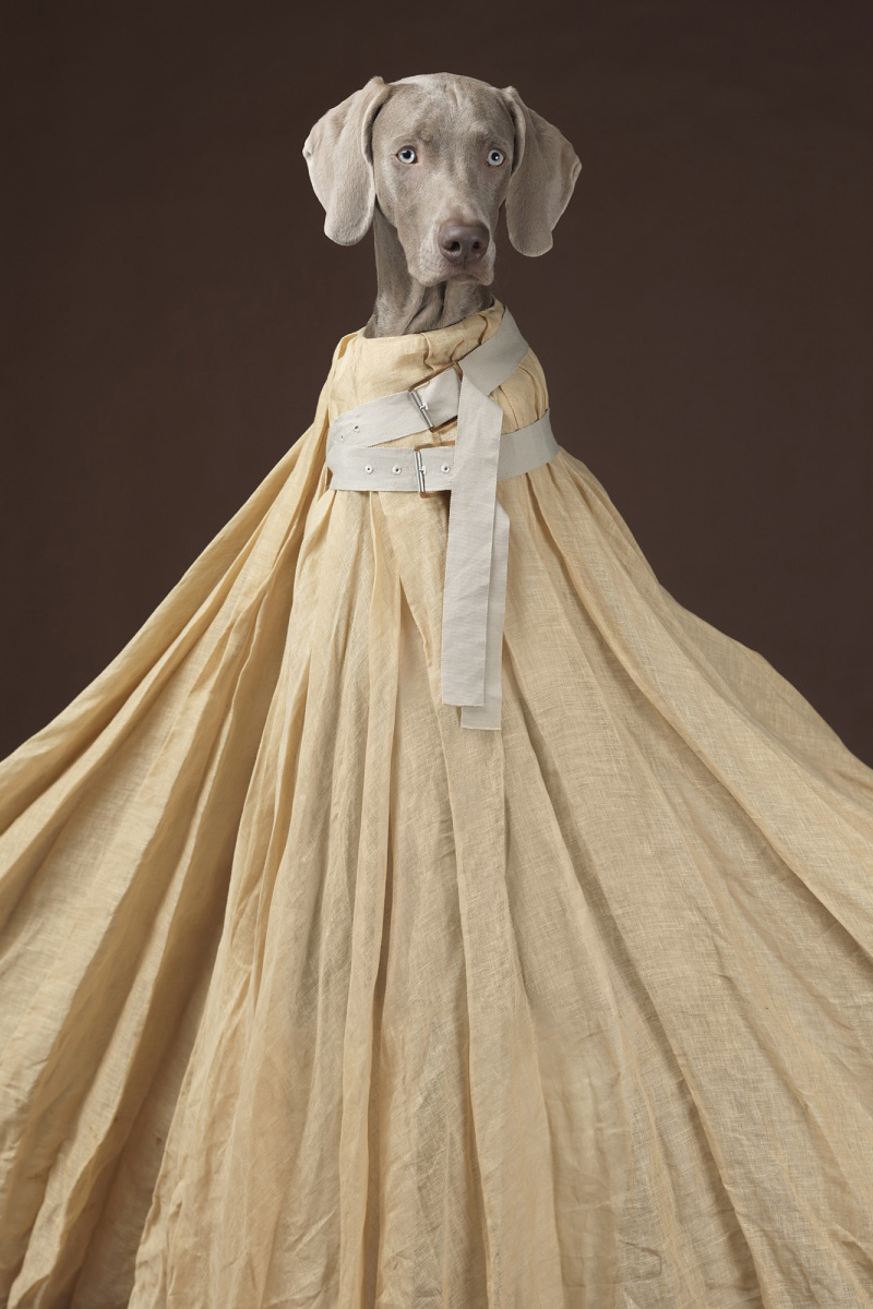 """Hat Dogs"" by William Wegman for Acne Studios"